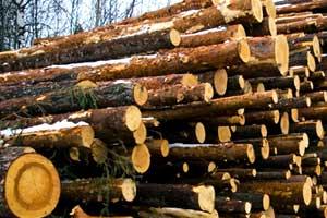podiranje dreves cenik